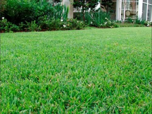 imagem da grama esmeralda
