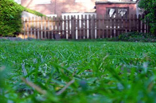 foto da grama santo agostinho