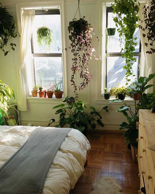plantas para decorar quarto rustico