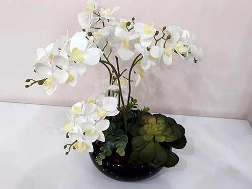 vaso de plantas com orquidea e suculentas