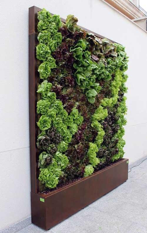 muro decorado com horta suspensa de vegetais