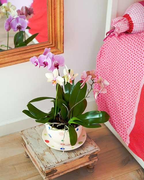 orquidea colorida combinando com a roupa de cama