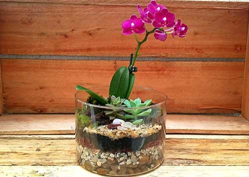 foto de orquidea combinada com suculenta