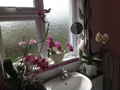 orquideas perto da janela do banheiro