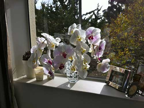 orquidea proxima da janela do quarto
