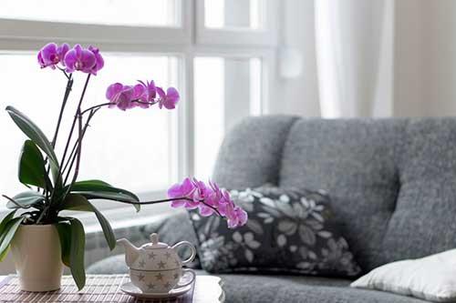 foto de sala de estar com orquidea roxa na mesa de centro
