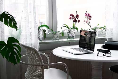 orquideas no escritorio proximo a janela