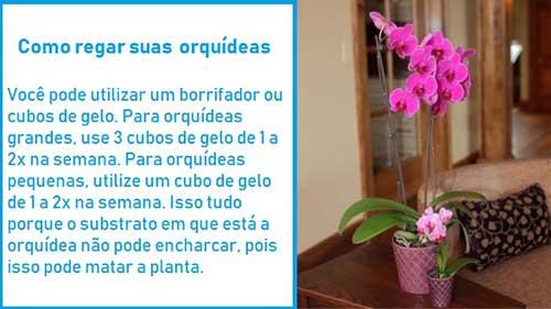 infografico ensinando como regar orquidea