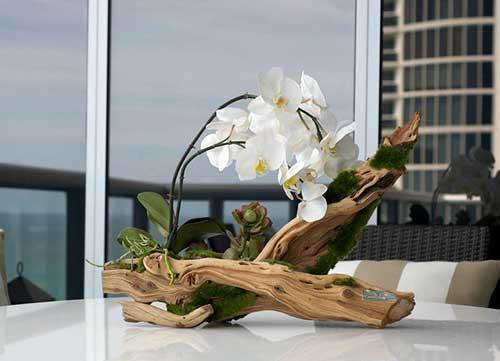 sala de estar ornamentada com orquidea