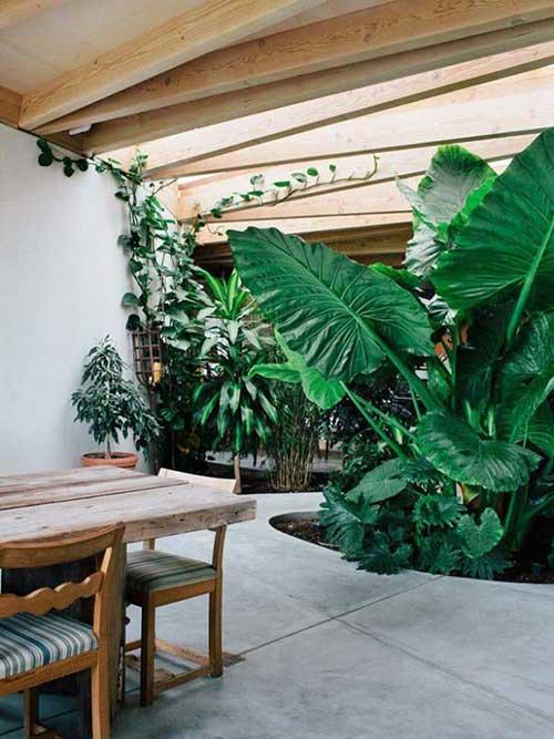 imagem de sala de jantar rustica com plantas grandes no jardim de inverno