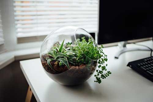 foto de vaso de planta suculenta sobre a mesa do escritorio comercial