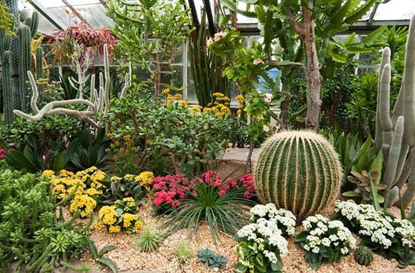 lindo jardim combinando cacto com flores coloridas