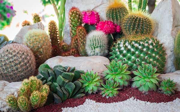 plantas e cactos mais diferentes tipos de pedras ornamentam esse jardim