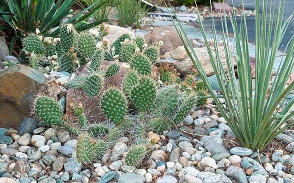 uma combinação imperdível é dos cactos com pedras no jardim, fica bem legal