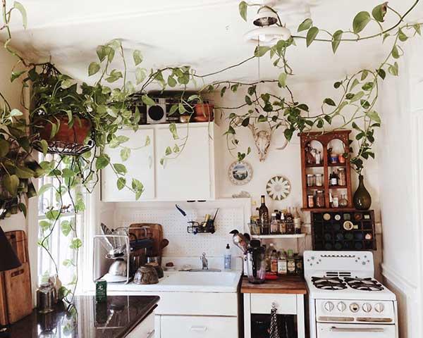 essa aqui apresenta um arranjo bem interessante das plantas, que se espraiam por toda a cozinha